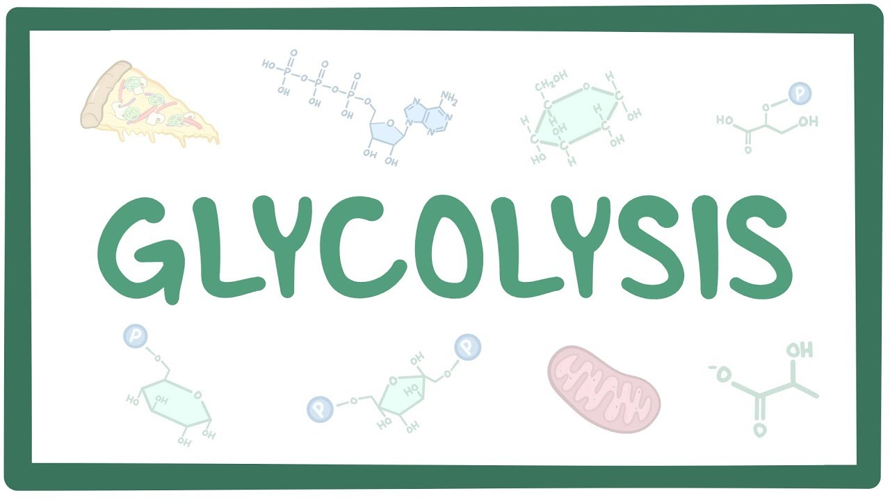 Osmosis Definition Glycolysis: Video, Ana...