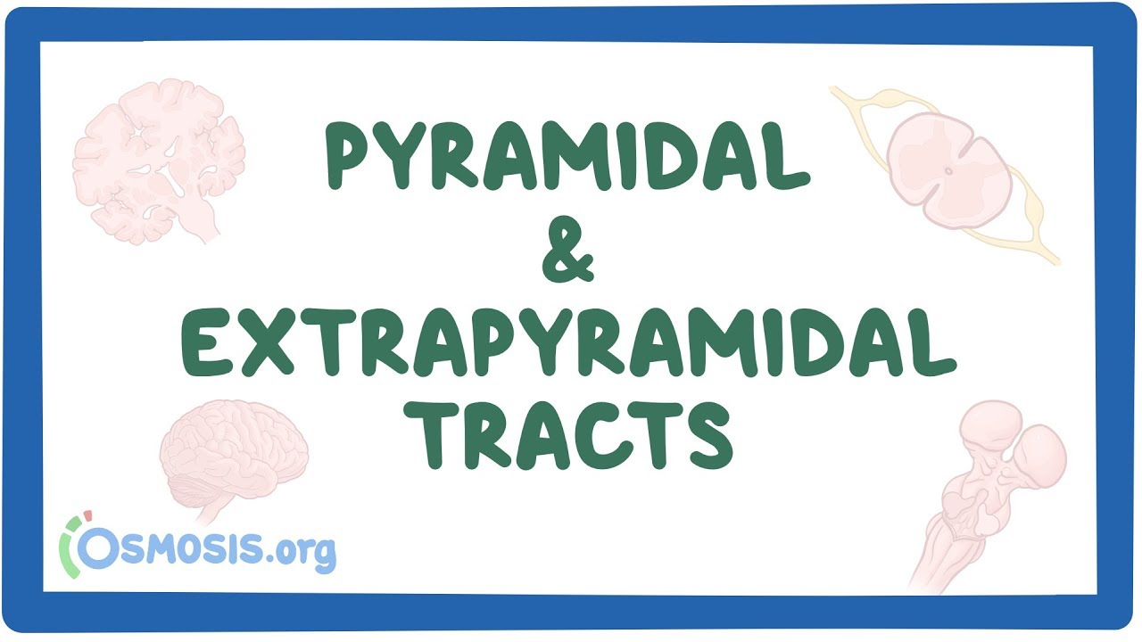 pyramidal and extrapyramidal tracts osmosis video library