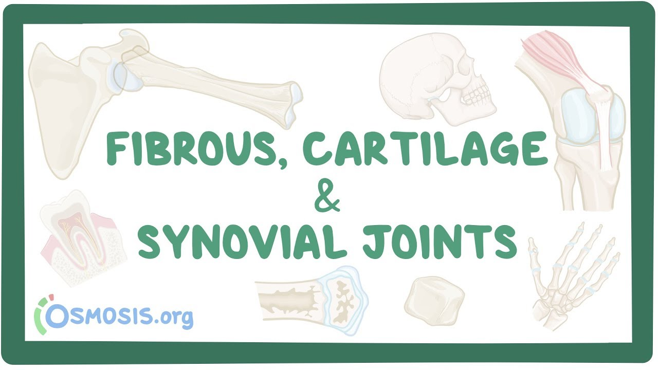 Fibrous Cartilage And Synovial Joints Osmosis A synchondrosis (joined by cartilage) is a cartilaginous joint where bones are joined together by hyaline cartilage, or where bone is united to hyaline cartilage. fibrous cartilage and synovial joints