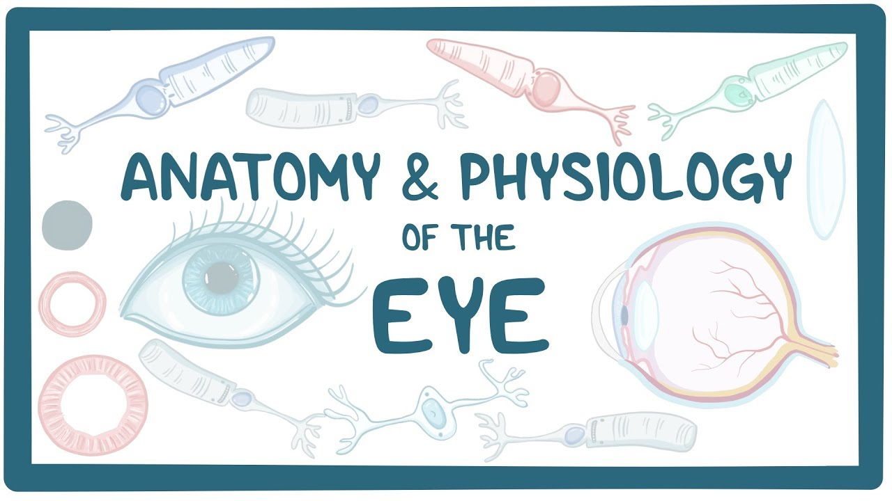 Anatomy and physiology of the eye - Osmosis