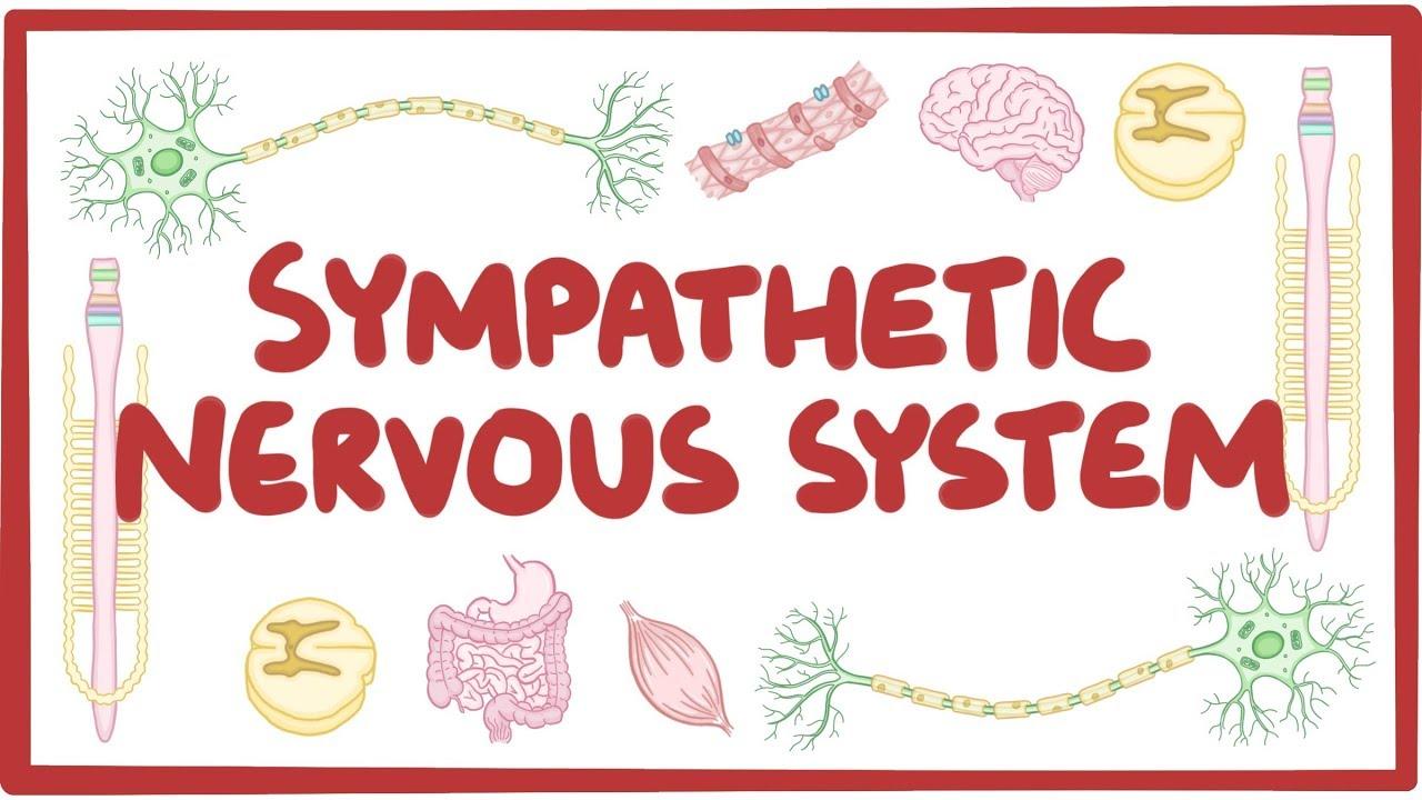 Sympathetic nervous system - Osmosis
