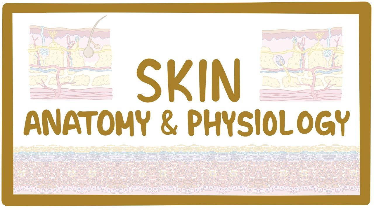 Skin anatomy and physiology - Osmosis