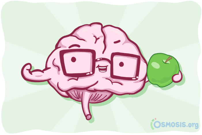 Osmosis illustration of a healthy brain.