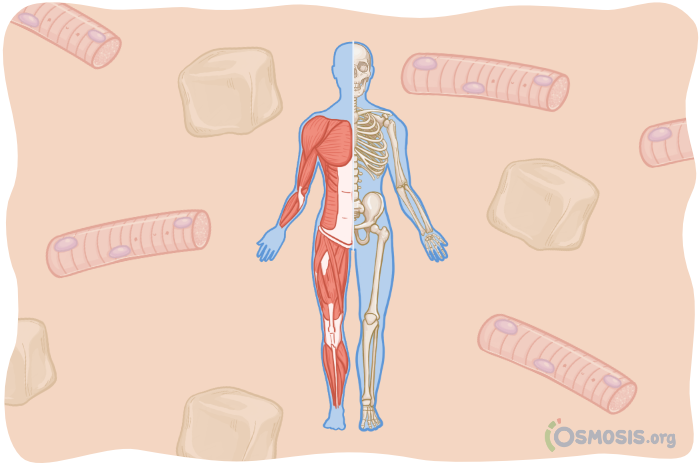 Osmosis illustration of the musculoskeletal system.